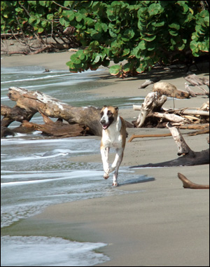 Dogs like going ashore for exercise