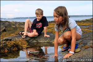 A field trip to tidal pools can be educational AND fun!