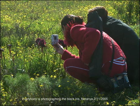 Everybody is photographing the black iris, Netanhya