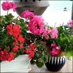 BevFeiges-Gardening-thb