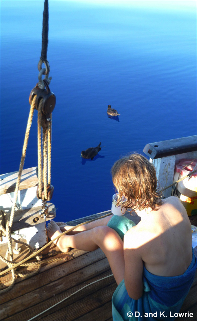 Breakfast with Westland Petrels, Becalmed, Pacific