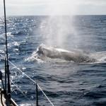 daria-whales-thb1