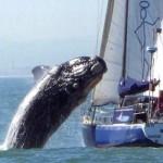 daria-whales-thb2